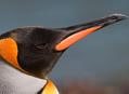 Za tučňáky patagonskými do Ohňové země