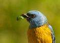 Zajímavé ptačí lokality v Chile