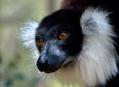Madagaskar 2008