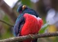 Do mlžného pralesa nejen za kolibříky