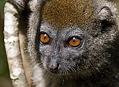 Lemuři - endemiti Madagaskaru