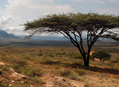 Když v poušti zaprší - Cesta k jezeru Turkana