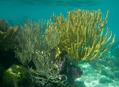 Poznáváme Belize (2.část - u moře)
