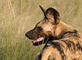 Botswana2009