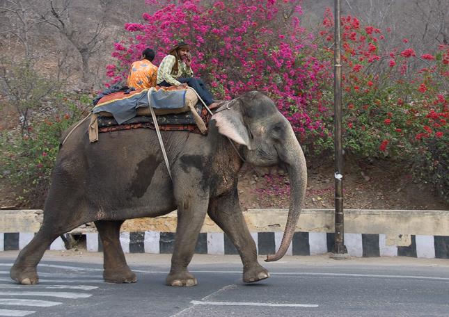 Na slonovi se může telefonovat i za jízdy