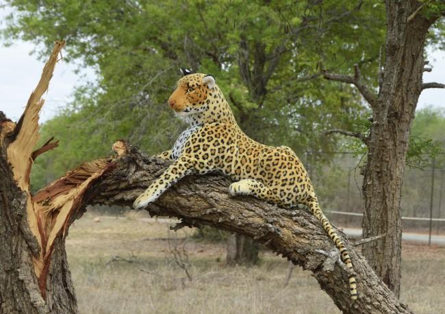 Leopard-cl-09