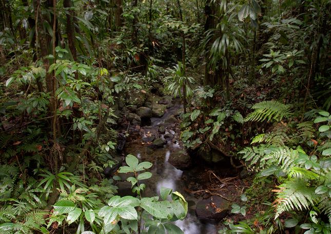 Potůček v džungli
