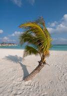 Palmička na pláži