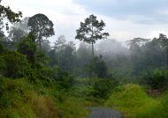 Opar v džungli